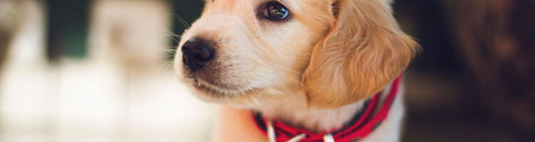 Budget Pet Care: 5 Tips For Owning Pets On A Tight Budget